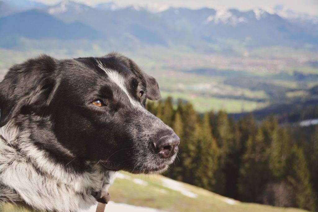 Mika genießt den Ausblick am Zwiesel.