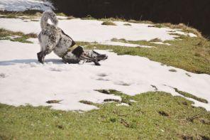 Mika freut sich, dass wir beim Abstieg noch etwas Schnee finden.
