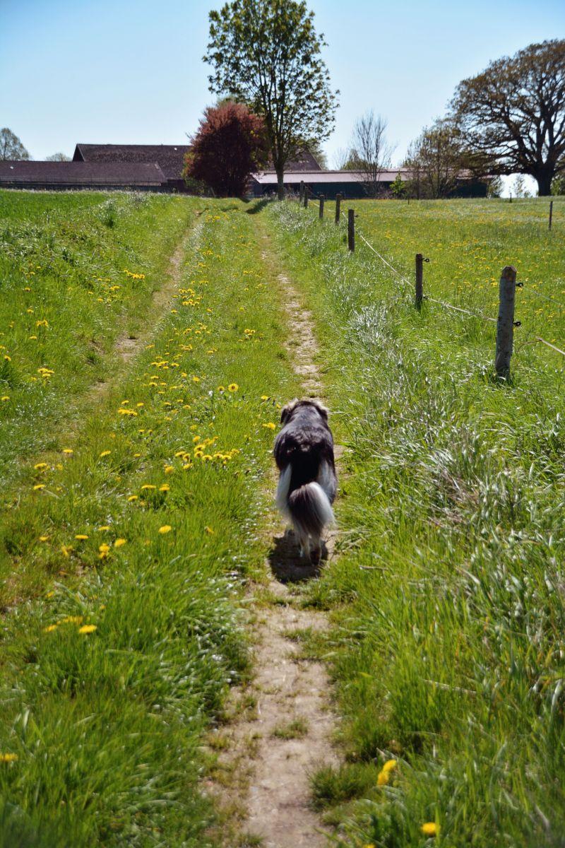 """Unser """"Umweg"""" über Farchach und Mörlbach führt uns noch über Feldwege..."""