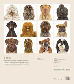 Wandkalender Dogs mit Fotografien von Andrew Grant