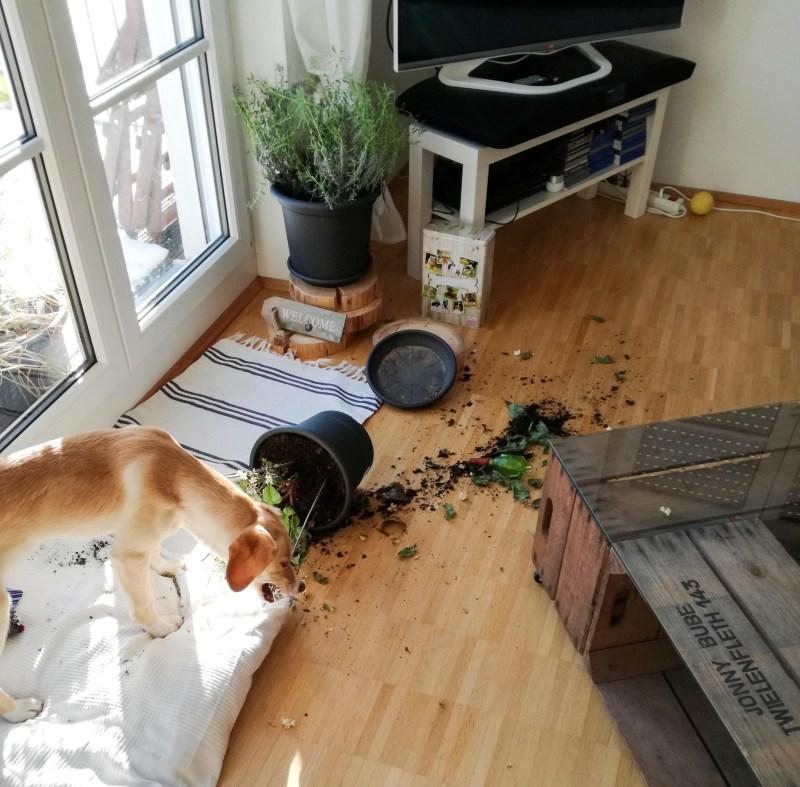 Bounty Hund München