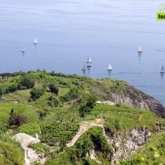 I paesaggi terrazzati di Ischia