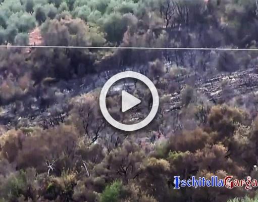 Incendio Ischitella Carpino