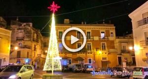 Carpino albero di Natale