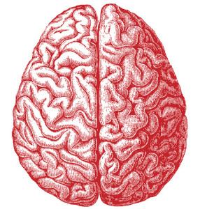 brain  Allan Ajifo 14599057094_8e82e0e482_b_2