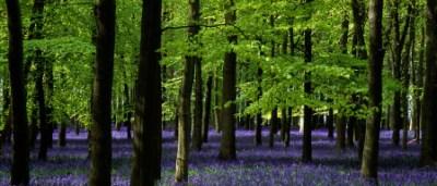 Ashridge Park, Hertfordshire, UK | National Trust Woodlands carp