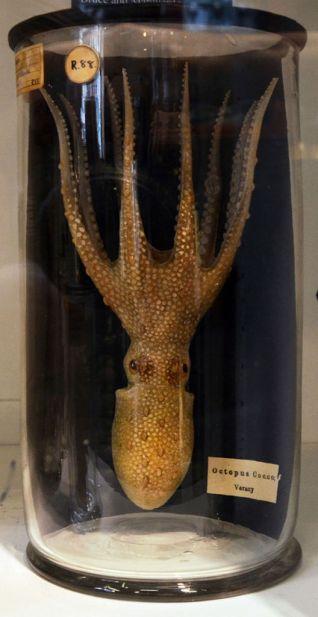 upside down octopus in jar