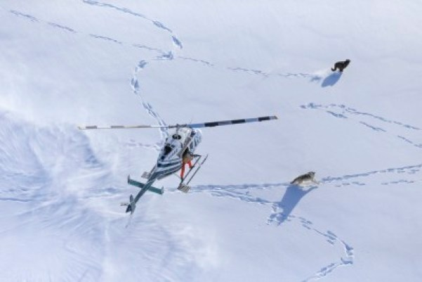 wolf and helicopter in the snow