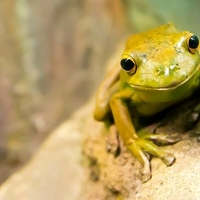 Der sprechende Frosch