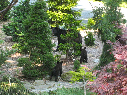 Bears in the garden