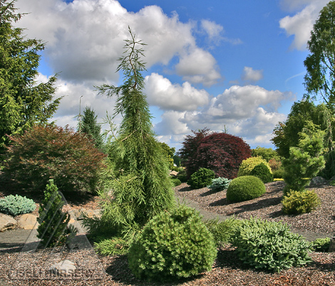 Beautiful garden featuring dwarf conifers