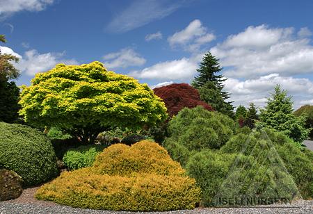 Iseli Display Garden