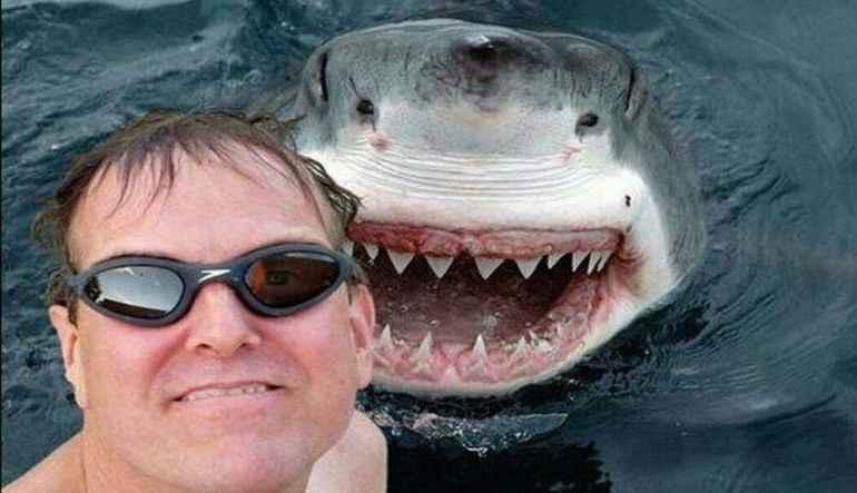 selfie-köpekbalığı