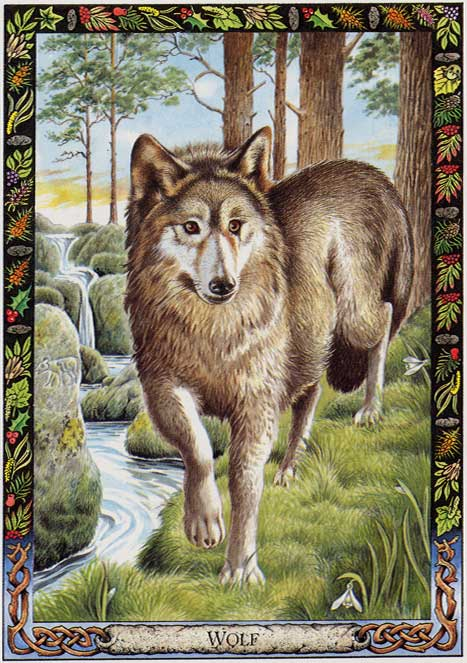 Druid Animal Oracle Wolf By Land Sea And Sky