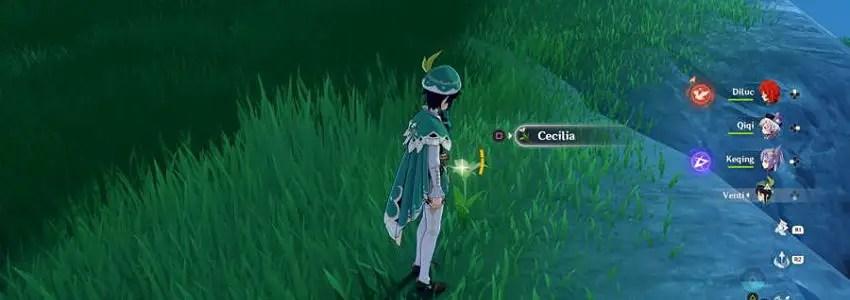 Where To Get Cecilia In Genshin Impact