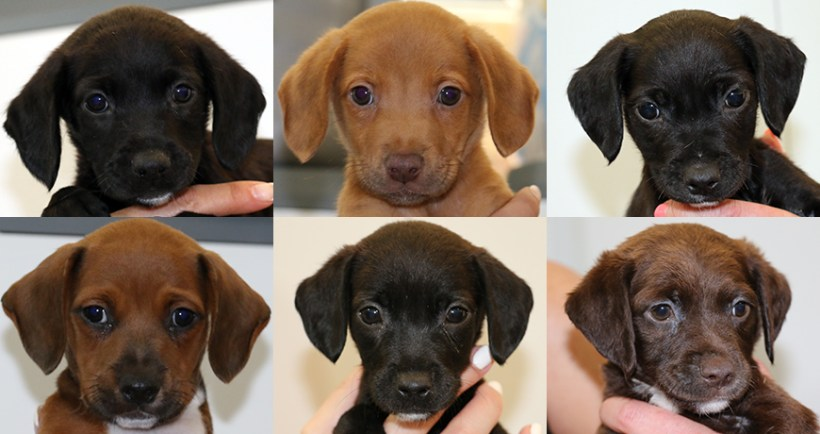 Marta's puppies