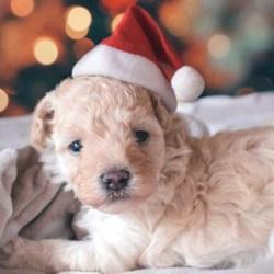 December Adoptions – Christmas stories!