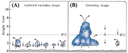 Figure 19 (Click here to enlarge)