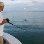 june florida keys tarpon