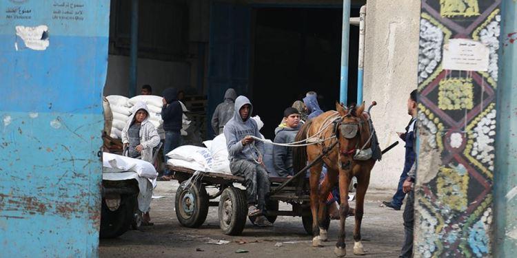 Distribusi bantuan UNRWA di Palestina. Foto: PIC