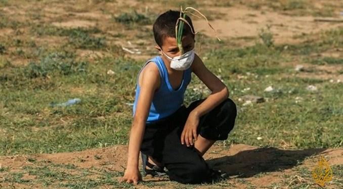 Mohammed Ayash, bocah pemberani dari Gaza. Foto: Palestine chronicle