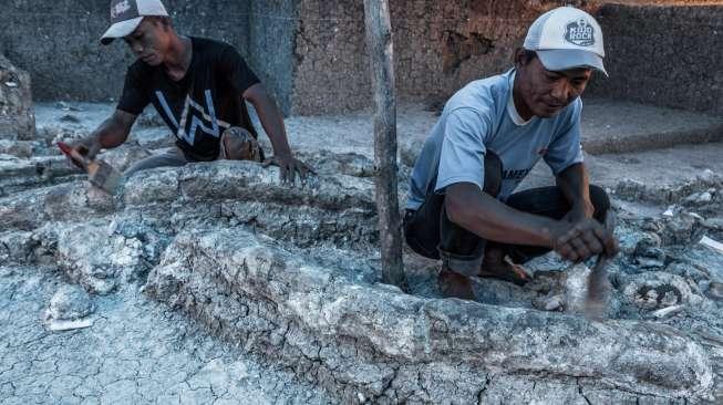 Warga temukan fosil gading gajah. Foto: Suara