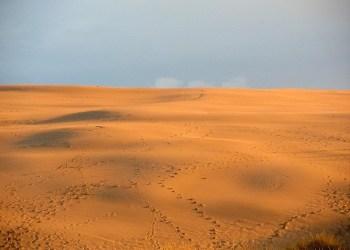 Ilstrasi gurun. Foto: Pixabay