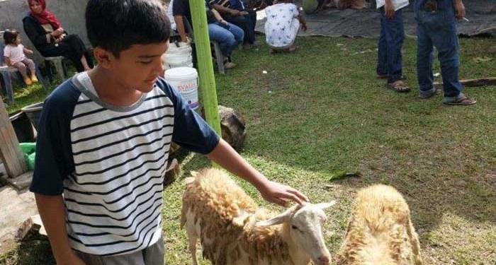 Alif, siswa yang masih kelas 1 SMP menyisihkan uang jajannya sejak SD agar bisa menambung untuk membeli seekor kambing dan ikut berkurban. Foto: Tribunnews