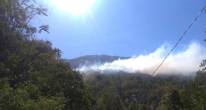 Kebakaran hutan gunung lawu. Foto: Detik