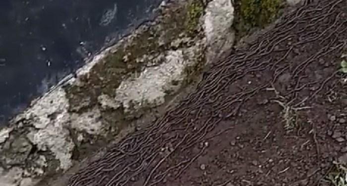 Ribuan cacing keluar dari dalam tanah di Jawa Tengah. Foto: Instagram