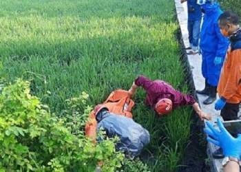 Petani si Sragen Jawa Tengah tewas kena jebakan tikus beraliran listrik. Foto: Kompas