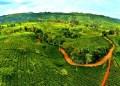 Kebun teh Taraju di Tasikmalaya. Foto: Wisata alam Tasikmalaya