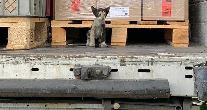 Anak kucing dari Tunisia tiba di Jerman. Foto: Tunisianumerique