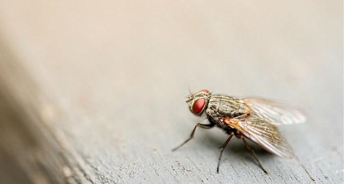 Lalat. Foto: Story.one