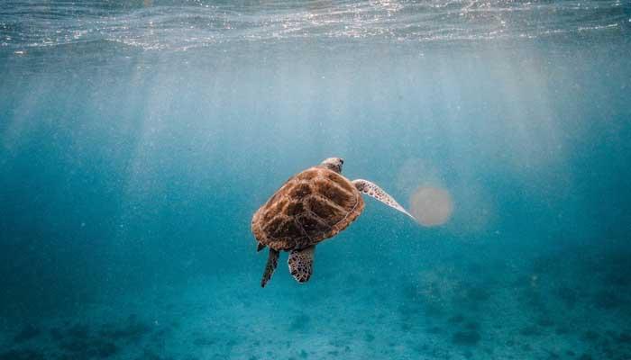 fakta laut indonesia