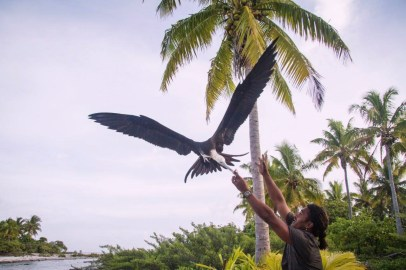 One of the local team members offers a Frigatebird a piece of the fish caught fresh from the reef. The frigate birds, terns and reef sharks all showed up to join the action everytime the days catch is cleaned in the lagoon on Tenerunga Atoll.