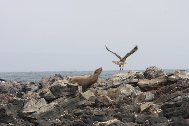 Island Conservation science pinzon island galapagos ecuador photo gallery