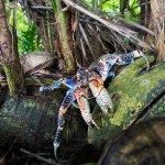 Island conservation science palmyra atoll line islands USA photography