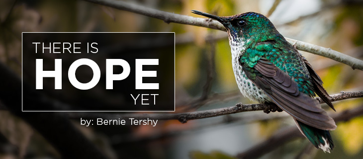 island conservation bernie tershy female juan fernandez firecrown