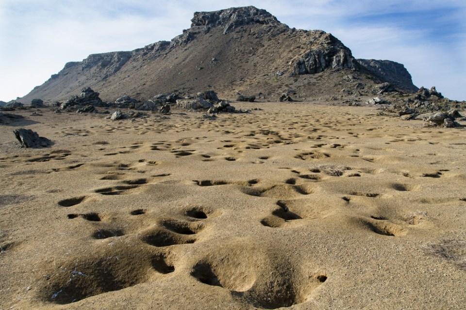 island conservation peruvian diving petrel burrows