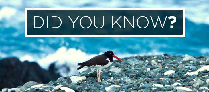 Island Conservation Did You Know Island Birds