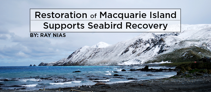island conservation macquarie island feat