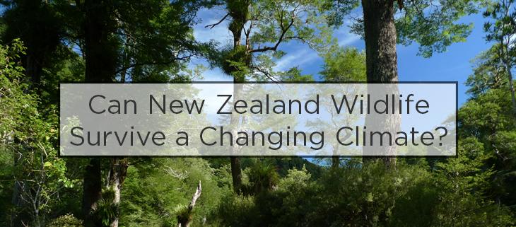island conservation nz climate change wildlife