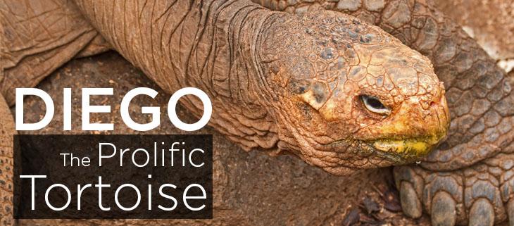 island conservation juvenille espanola giant tortoises