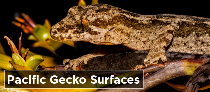 island conservation preventing extinctions gecko