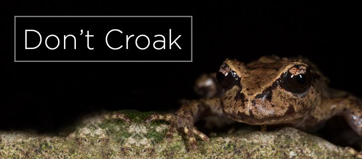 island conservation new zealand native frog