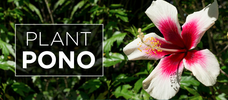 Island-Conservation-Preventing-Extinctions-hawaiian-plants-feat