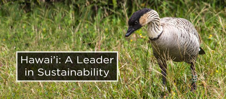 island-conservation-hawaii-sustainability-initiative-feat