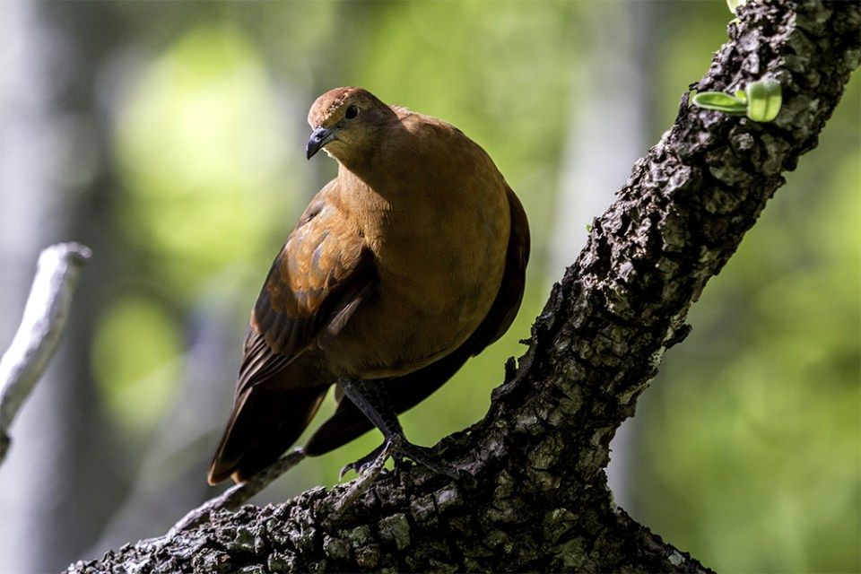 island-conservation-richard-french-polynesia