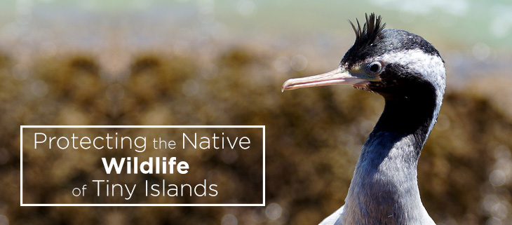 island-conservation-preventing-extinctions-tiny-islands-new-zealand-feat